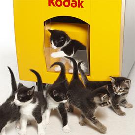 Kodak-kittens